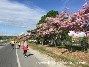 These flowers are in season, and they had plenty of it in KK!